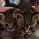 Dunaparti cicák